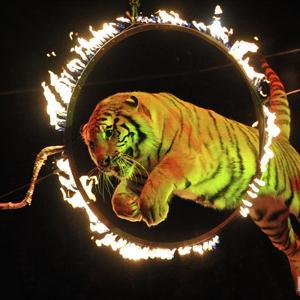 Цирки Саракташа