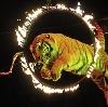 Цирки в Саракташе