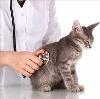 Ветеринарные клиники в Саракташе